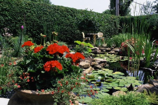 оазис у дома: дизайн водных садов